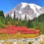 美國西雅圖接機 雷尼爾火山國家公園+市區遊覽+奧林匹克國家公園 4日遊-2021