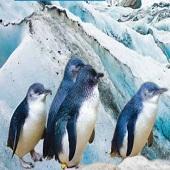 新西蘭北南島 風光冰川10天-2020(週一出發)