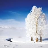 冬冬日黃石-大提頓-傑克森5日游(YW5)-2020