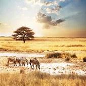 南非阿聯酋真我絢麗多彩之旅12天-2020/2021